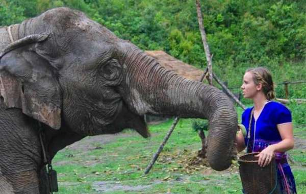 Spend Your Holidays in elephant sanctuary Chiang Mai