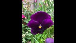 Relax Spring Flowers & Birds ورود وعصافير ريلاكس
