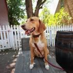 Gus Bosco Profile Picture