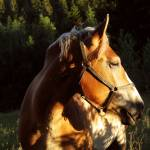 Lucile Padberg Profile Picture