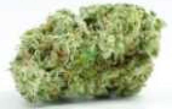 Buy Hybrid Strains Online UK