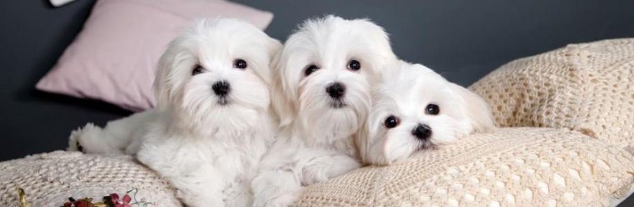 AllanTeacup Puppies Cover Image