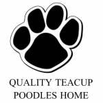 Teacup Poodle Puppies Profile Picture