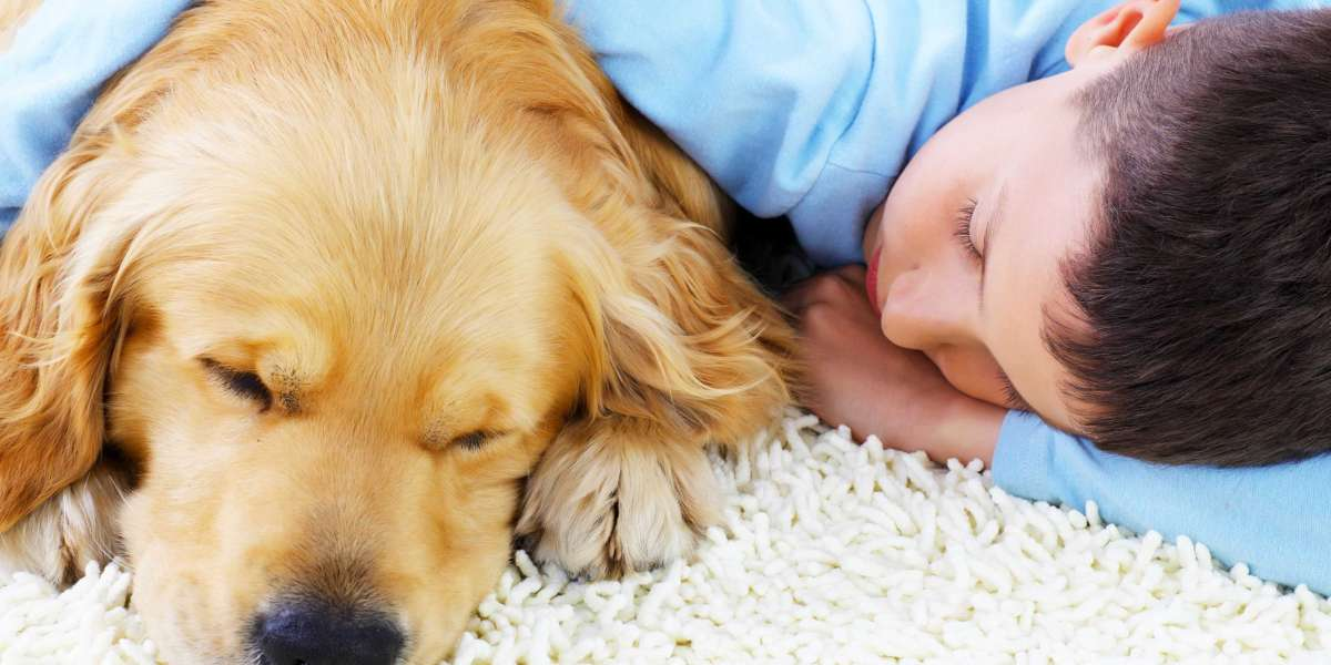Best Carpet Types for Pets In 2020