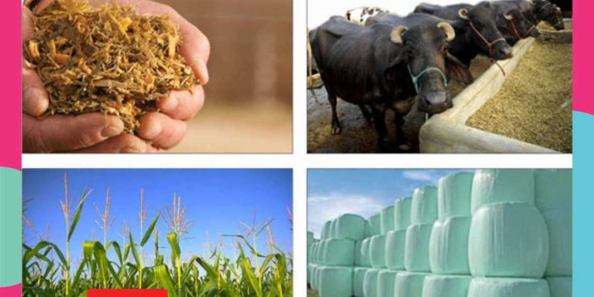 7 Mistakes That Can Ruin Your Silage